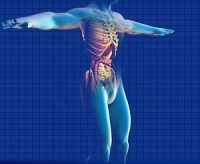 human-digestive-system-163714_640 (1)